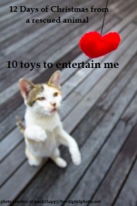 10 Animal